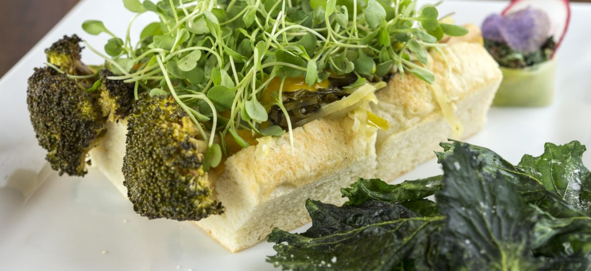 Meatless Meals for Dogs and Cats