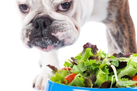 Vegan/Vegetarian Pets